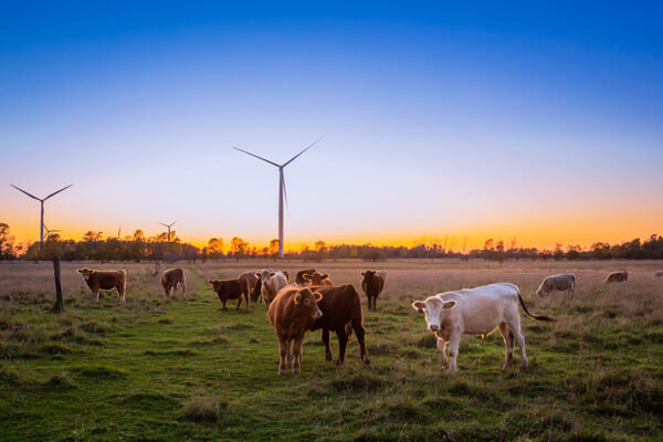 Renewable Energy Zone in Walcha